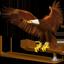 Old Thunderbird V2 Icon