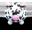 White Cow Black Spots-32