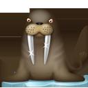 Walrus-128