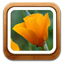 Gallery Flower icon